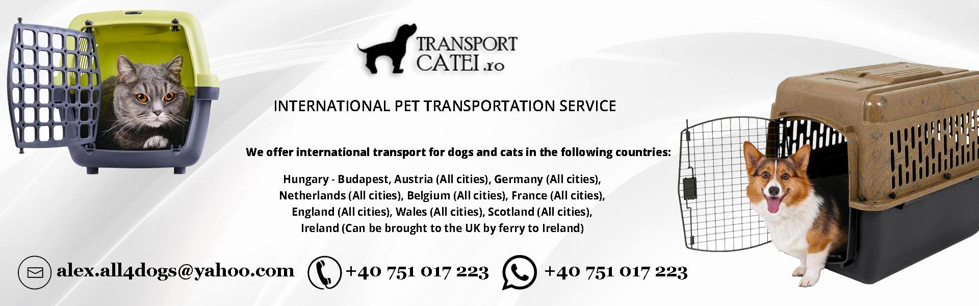 Transport animale de companie international en